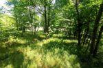 záhrada - Svätý Jur - Fotografia 5