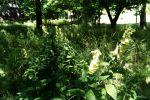 záhrada - Svätý Jur - Fotografia 7