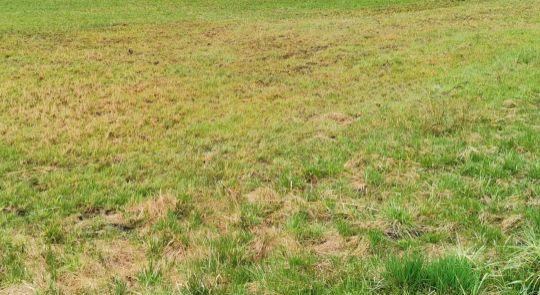 Predaj trvalý trávnatý porast Kokava nad Rimavicou