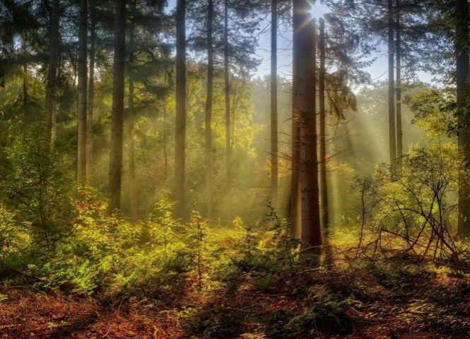 lesné pozemky - Kokava nad Rimavicou - Fotografia 1