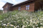 chata - Zemianske Podhradie - Fotografia 46