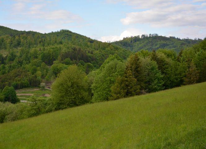 rekreačný pozemok - Povina - Fotografia 1