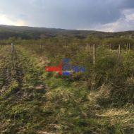 Neobrábaný vinohrad Pezinok, lokalita nad zberným dvorom - Fajgalská cesta - 80 árov