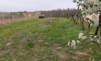 Exkluzívne u  nás. Pozemok na viniciach v obci  Bátorové Kosihy