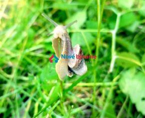 HĽADÁME pre mladú rodinu rodinný dom v okolí Humenného (N012-MIM)