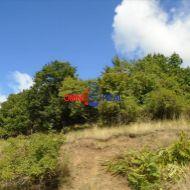 Nebrábaný pusták Pezinok vedený ako lesný pozemok, lokalita Stará Hora - 25 árov