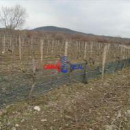 Obrábaný vinohrad Pezinok, lokalita Zumberg, smer Cajla - 18,5 árov