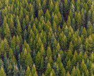 Lesné pozemky Slanická Osada