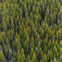 Lesné pozemky, Námestovo