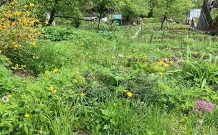 Predáme záhradu s pozemkom 320 m2 na stavbu chatky  - cena 9 000 €