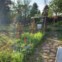 Záhrada, Levice, 500 m², Pôvodný stav