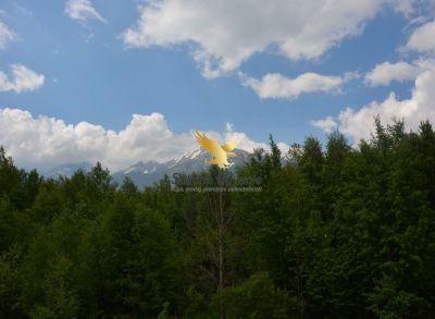 Veľký mezonet s výhľadom na Vysoké Tatry