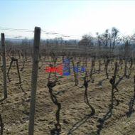 Obrábaný vinohrad Modra lokalita Biele Hliny - 2800 m2