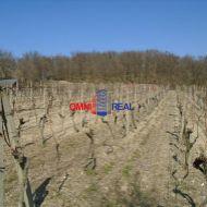 Obrábaný vinohrad Modra lokalita nad ulicou Ferdinanda Píseckého - 2650 m2