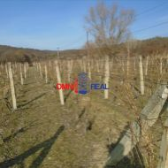 Obrábaný vinohrad medzi Modru a Dubovou - 2230 m2