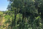 záhradná chata - Branč - Fotografia 5