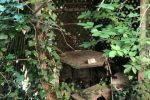 záhradná chata - Branč - Fotografia 6