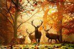 lesné pozemky - Kleňany - Fotografia 3