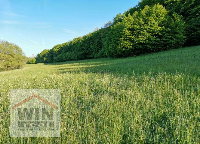 trvalý trávnatý porast - Krupina - Fotografia 1