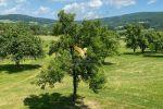 Vidiecky dom - Pliešovce - Fotografia 47