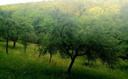 Predaj pozemok 8772 m2 v obci Priepasné okr. Myjava