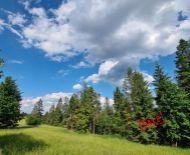 Rekreačné pozemky Oravská Lesná