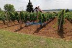 záhradná chata - Levice - Fotografia 7
