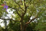 záhrada - Bobot - Fotografia 2