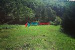 trvalý trávnatý porast - Hrubov - Fotografia 11