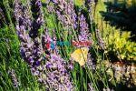 trvalý trávnatý porast - Hrubov - Fotografia 2