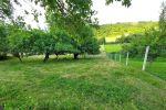 záhrada - Gregorovce - Fotografia 5