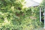 záhradná chata - Veľký Cetín - Fotografia 3