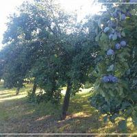 Ovocné sady, Iža, 1155 m²