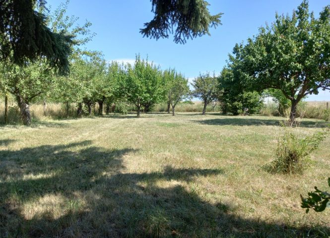 záhrada - Levice - Fotografia 1