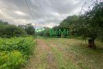 vinice, chmelnice - Trnava pri Laborci - Fotografia 12