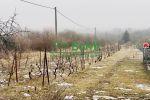 vinice, chmelnice - Trnava pri Laborci - Fotografia 2
