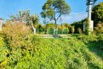 vinice, chmelnice - Trnava pri Laborci - Fotografia 9