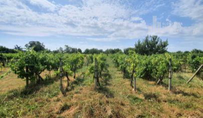 NA PREDAJ: starší RD, krásny rovinatý pozemok - 1825m², vinohrad, výborná poloha, obec Šenkvice – ul. Trlinská, len 5 km od Pezinka