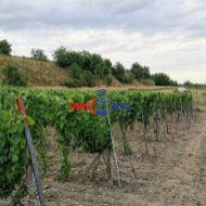 Obrábaný vinohrad v Modre lokalita Grefty - 6 100 m2,