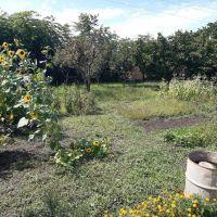 Záhrada, Trnava, 250 m², Pôvodný stav