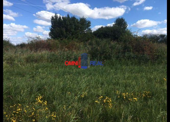 trvalý trávnatý porast - Modra - Fotografia 1