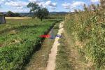 trvalý trávnatý porast - Modra - Fotografia 2