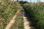trvalý trávnatý porast - Modra - Fotografia 3