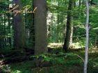 Na predaj zmiešaný les
