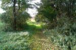 rekreačný pozemok - Myjava - Fotografia 7