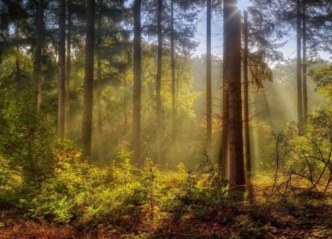 lesné pozemky - Ulič - Fotografia 1