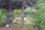 záhrada - Trnava - Fotografia 6
