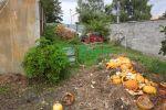záhrada - Horné Saliby - Fotografia 4