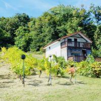 Vinice, chmelnice, Vinné, 1079 m²