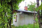 vinice, chmelnice - Hronský Beňadik - Fotografia 10